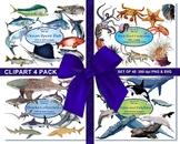 Fluffy Alphabet Clip Art Set