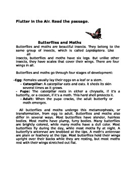 Flutter in the Air for 4th Grade