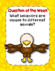 Fly, Eagle, Fly! Reading Street 3rd Grade Resource Pack Unit 4 Story 5