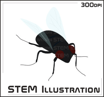 Fly Illustration Clip Art Clipart Image Graphic Bugs Insects