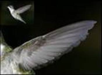 Fly Like a Bird! Power Point Presentation