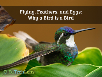 Flying, Feathers, and Eggs: Why a Bird is a Bird PDF