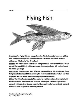 Flying Fish - Informational Article Questions Review Facts Vocabulary