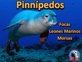 La Foca, El Leon Marino, Y La Morsa: Los Pinnípedos: PowerPoint y Actividades