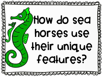 Focusing Questions for Sea Horse: The Shyest Fish in the Sea with Wit and Wisdom