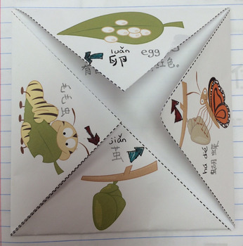 Fold-able life cycle of butterfly in Chinese 蝴蝶的生命周期(简+繁体)