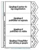 Foldable libreta interactiva: La computadora con RUBRICA  /Interactive notebook