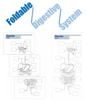 Foldable Digestive System