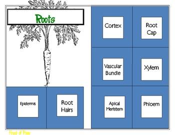Foldable Parts of Plants