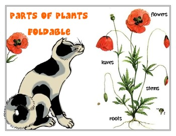 Foldable Parts of Plants