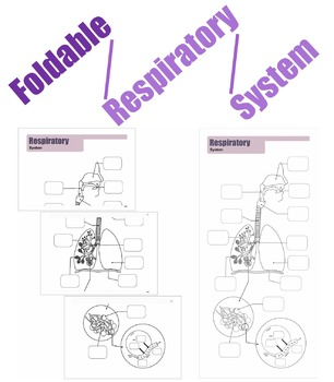 Foldable Respiratory System