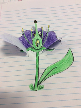 Foldable, interactive notebook parts of the flower, flower reproduction