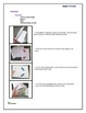 Phylum Aves (Birds) Foldable