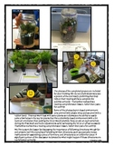 Following Directions Activity: Terrarium in a Jar (Reading Comprehension)