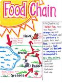5th Grade Food Chain