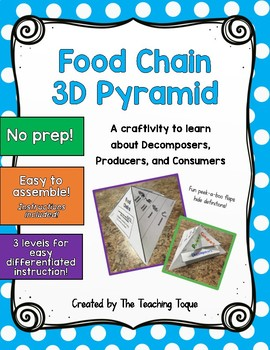 Food Chain Pyramid 3D Activity
