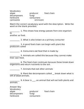 Food Chain Activities