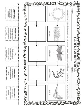Food Chain Activities, Center and Assessment - Spanish