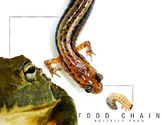 Food Chain Activity Pack