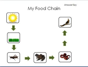 photo relating to Food Chain Printable called Food stuff Chain Sport Printable