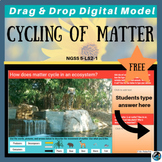 Food Chain Activity (Tiger) & Cycling of Matter: Google Digital Model- FREE!
