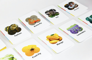 Food Chain Card Game