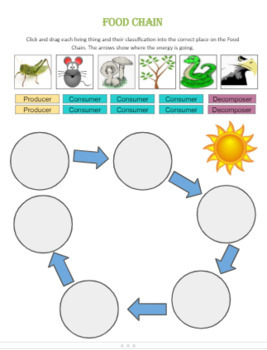 Food Chain Click and Drag Concept Map Worksheet