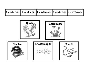Food Chain Cut and Paste