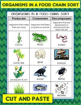 Organisms in a Food Chain Sort Cut & Paste: Producer, Consumer, or Decomposer
