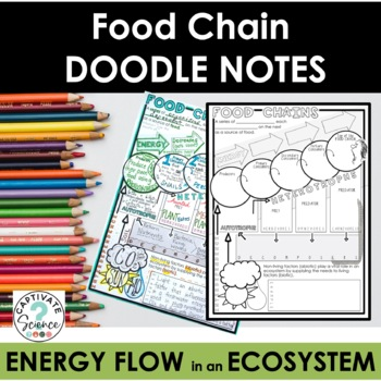 Food Chain Doodle Notes