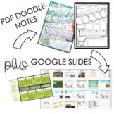 Food Chain Doodle Notes PLUS Digital Tools [Google Slides]