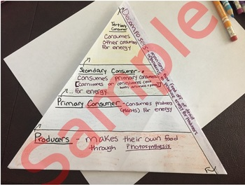 Food Chain/ Energy Flow pyramid interactive notes