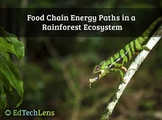 Food Chain Energy Paths In a Rainforest Ecosystem PDF