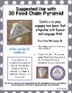 Food Chain Facts Worksheet