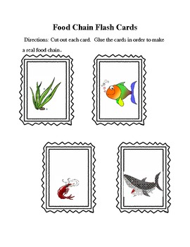 Food Chain Flash Cards