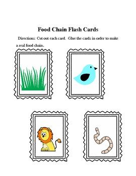 Food Chain Flash Cards