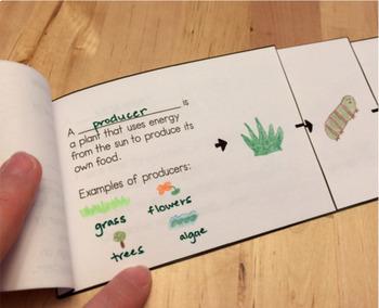 Food Chain Flip Book