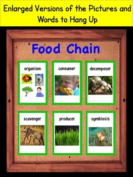 Food Chain Vocabulary Interactive Notebook
