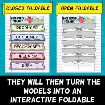 Food Chain Foldable - Frayer Model Format - Great for INBs!