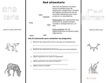 Food Chain Foldable in Spanish