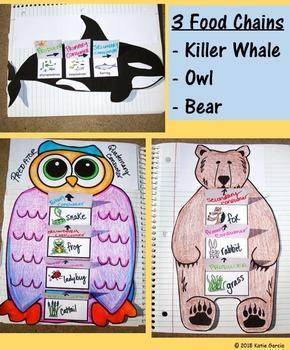 Food Chain Foldables - Whale, Owl, & Bear