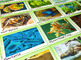 Food Chain and Food Web: Biome Card Sort Bundle