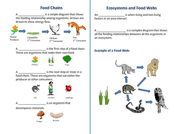 Food Chain, Food Web, Ecosystem, Producer, Consumer, Decomposer Notes