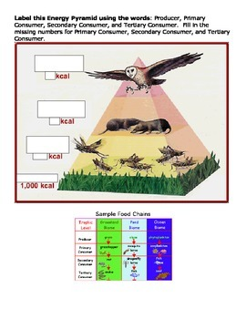 Food Chain-Food Web-Energy Pyramid Activities