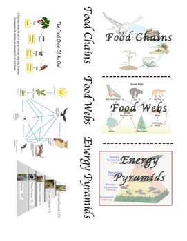 Food Chain Food Web Energy Pyramid Foldable