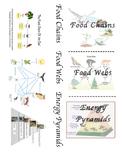 Food Chain Food Web Energy Pyramid Foldable
