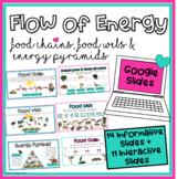 Food Chain, Food Web, Energy Pyramid Google Slides (info & interactive activity)