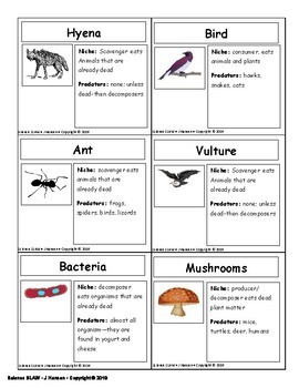Food Chain/ Food Web Lab