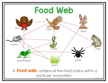 Food Chain Food Web Posters and Interactive Notebook INB Set