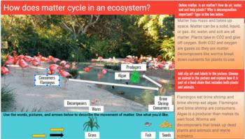 Food Chain: Google Apps Digital Model
